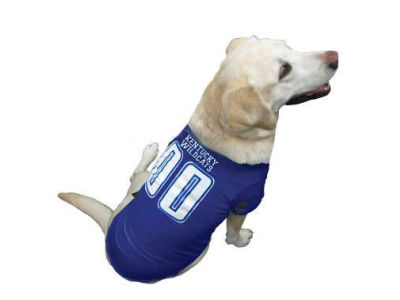 Kentucky Wildcats Pet Jersey